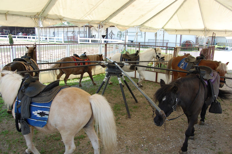 Pony Rentals Pony Rentals Forest View Farms Horseback