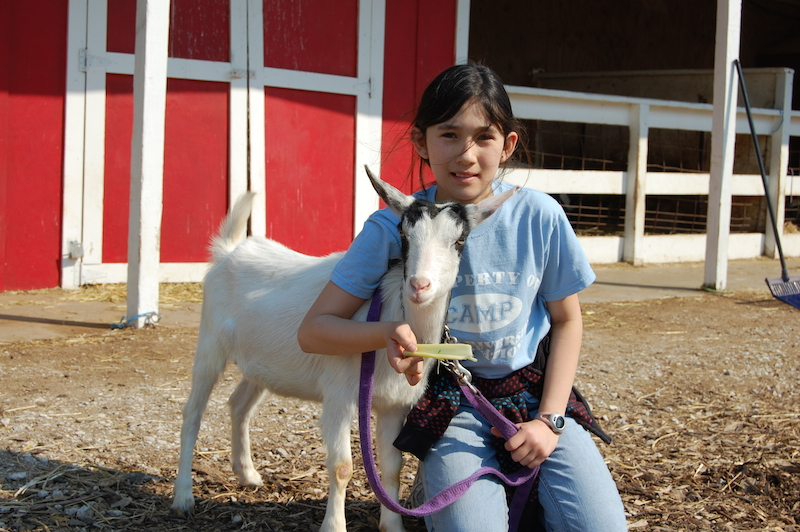 Petting Farm | Petting Zoo | Forest View Farms, horseback
